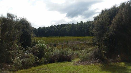 Ohakune, Новая Зеландия: Twin lakes walk