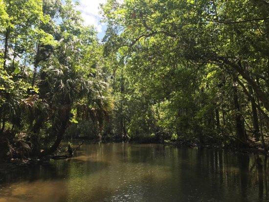 Homosassa Springs, FL: photo2.jpg