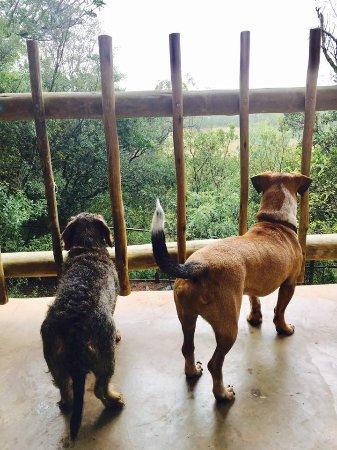 Magaliesburg, แอฟริกาใต้: Doggy view