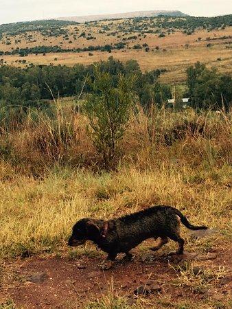 Magaliesburg, แอฟริกาใต้: View from the ridge