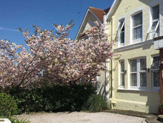 Two Beaches Bed & Breakfast: Two Beaches in Blossom