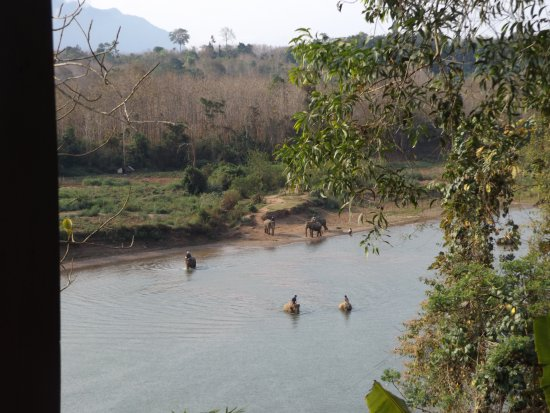 Ban Xieng Lom, Laos: Morning elephants coming back from the jungle.