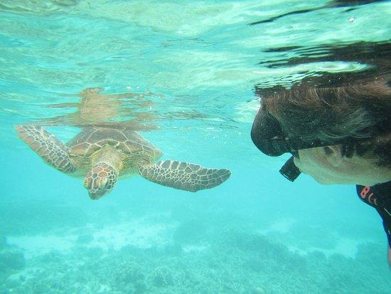 Lady Elliot Island, Australia: Friendly local, lagoon