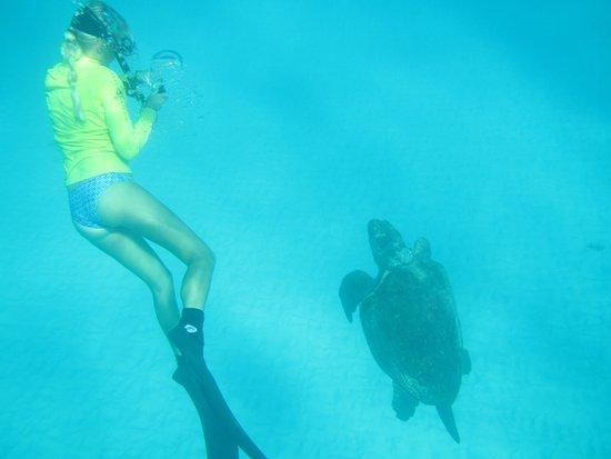 Lady Elliot Island, Australia: Blaise, loggerhead male, safari second reef