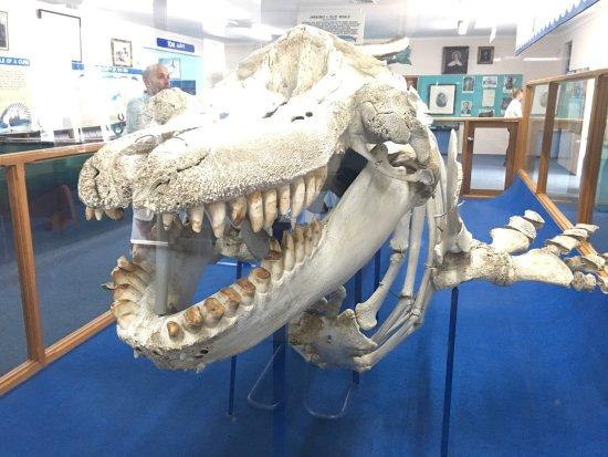 Killer Whale Museum: photo0.jpg