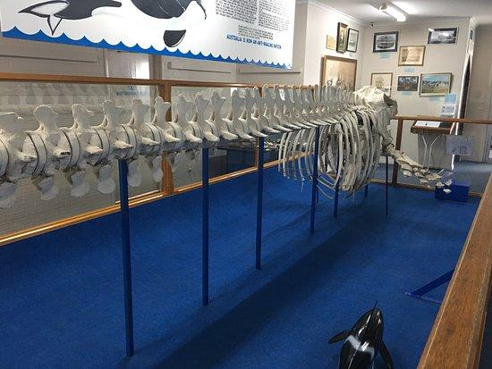 Killer Whale Museum: photo1.jpg