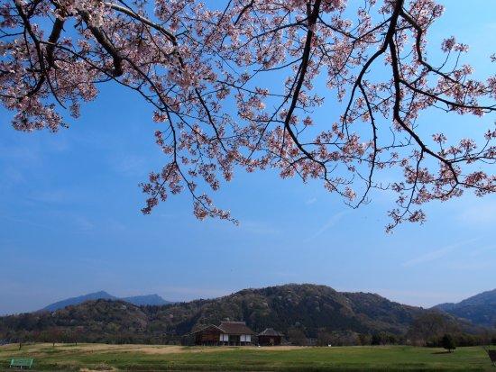 Hirasawa Kanga Ruins: 小池の桜と平沢官衙、筑波山