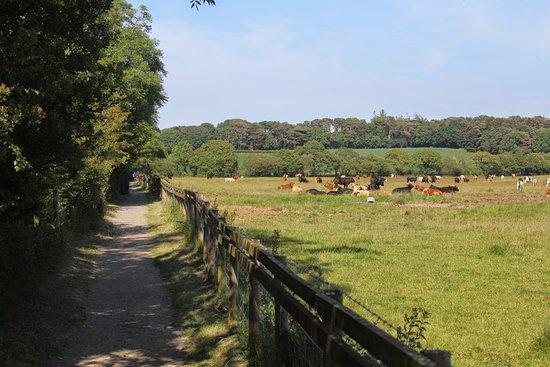 Gaerwen, UK: дорога к Bryn Celli Ddu