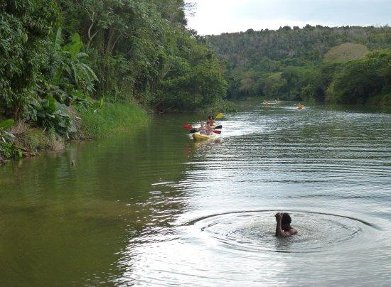 Bayahibe, Repubblica Dominicana: Agréable petit tour en kayak (pour ceux qui le veulent)