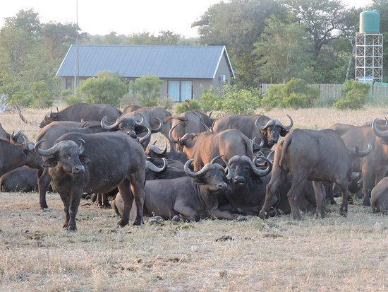 Klaserie Private Game Reserve, South Africa: Big five