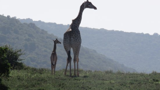 Shamwari Game Reserve Lodges: Mom and Daughter