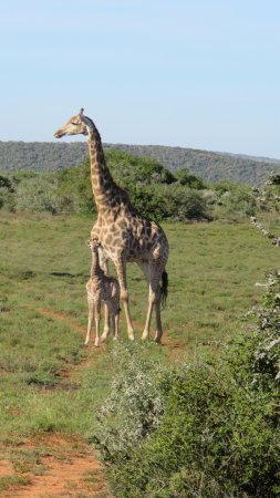 Shamwari Game Reserve, South Africa: less than 2 weeks young