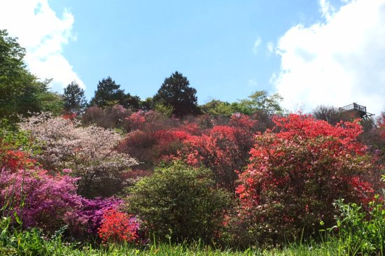 Saito, Japan: 左に桜の木も写っています。ぐるりと一周できる散策路もあります。