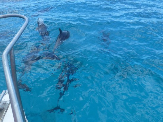 Bayahibe, Repubblica Dominicana: Rencontre surprise avec de nombreux dauphins !