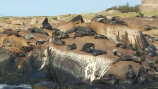 Isla de Lobos: IMG-20170415-WA0008_large.jpg