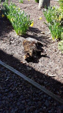 The Inn at Turkey Hill: The Turkey Hill cat, Cleo!