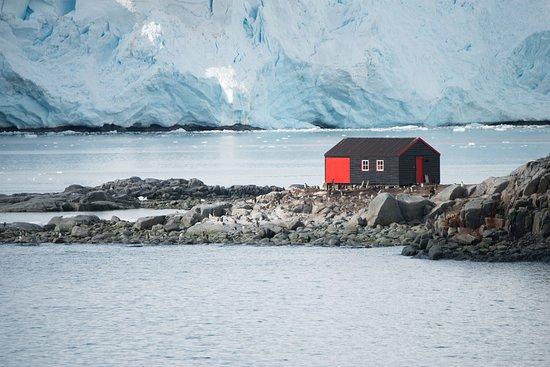 Port lockroy picture of penguin post office port for Port lockroy