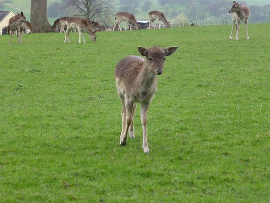 Spennymoor, UK: Young deer
