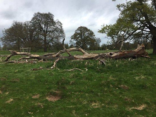 Charlecote Park: photo4.jpg