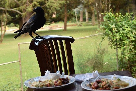 Victoria Park Cafe - Picture of Victoria Gardens Restaurant, Nuwara ...