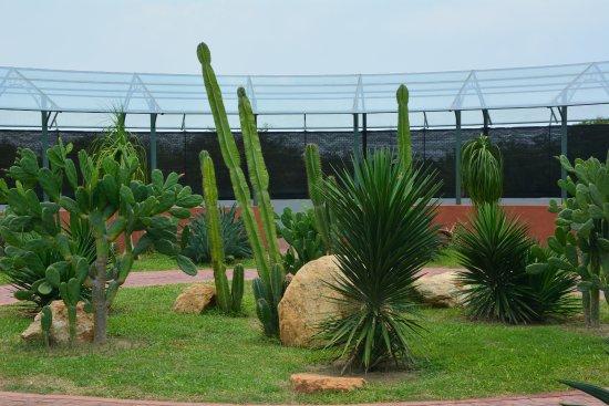 Cactus Garden - Picture of Dry Zone Botanic Gardens - Hambantota ...