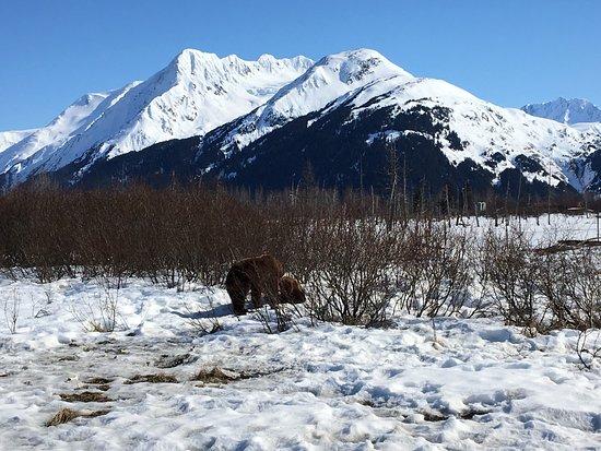 how to get to alaska wildlife conservation center