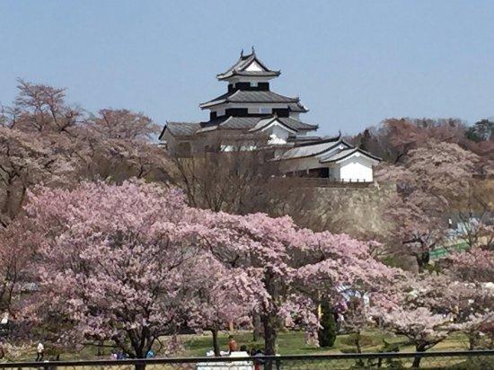 Shirakawa, اليابان: 白河小峰城と桜