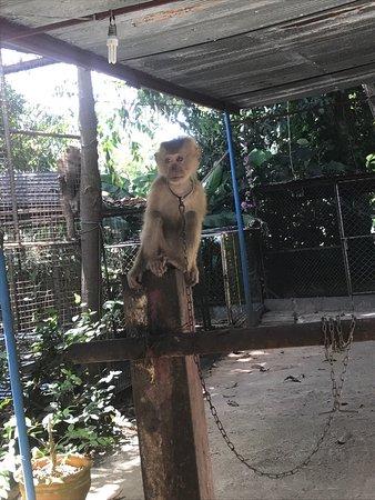 Samui Monkey Theatre: photo0.jpg
