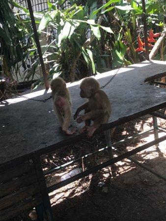 Samui Monkey Theatre: photo2.jpg