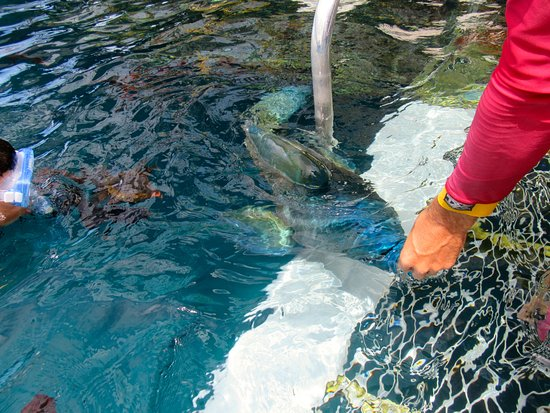 Agincourt Reef: Fish being fed.