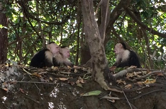 La Mansion Bed & Breakfast : monkeys on river boat tour