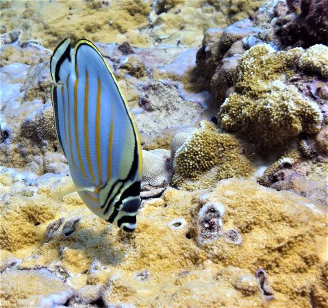 Alex's Aquatic Adventures: Reef Fish 1