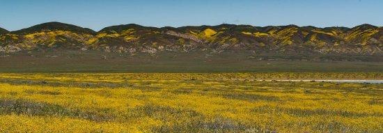 Maricopa, كاليفورنيا: Carrizo Plain National Monument during Super Bloom April 2017
