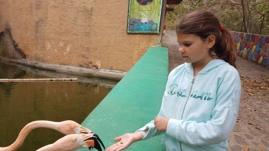 Vallarta Zoo : Karmienie flamingów