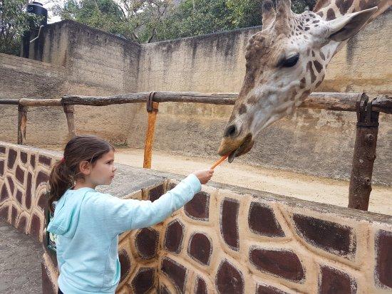 Vallarta Zoo : karmienie żyrafy