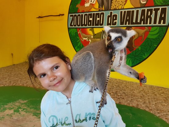 Vallarta Zoo : zabawa z lemurem