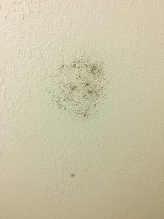 Lithonia, GA: mold on wall