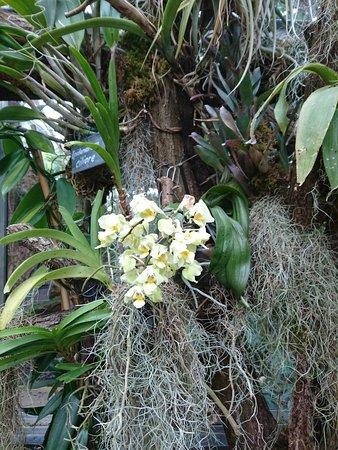 Frutigen, Switzerland: Orchidée alpestre