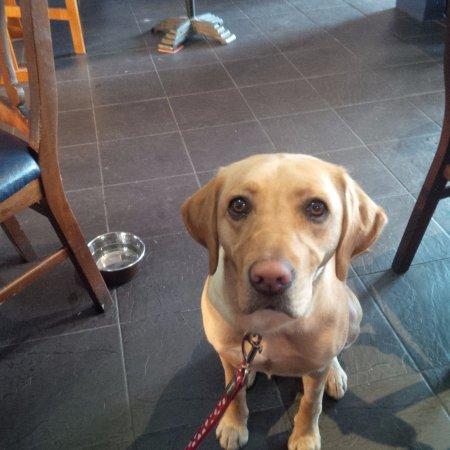 Dog Friendly Restaurants In Calgary