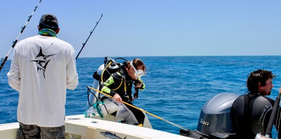 Blue Reef Adventures Ltd: Spear some Lionfish
