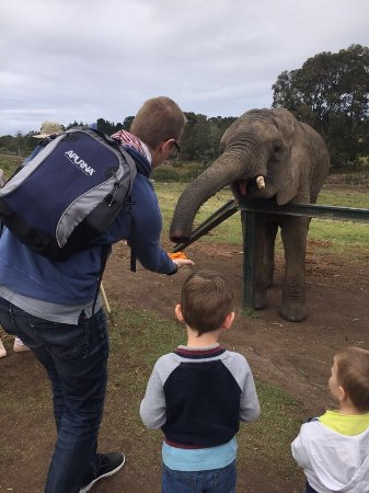 Knysna Elephant Park: photo0.jpg