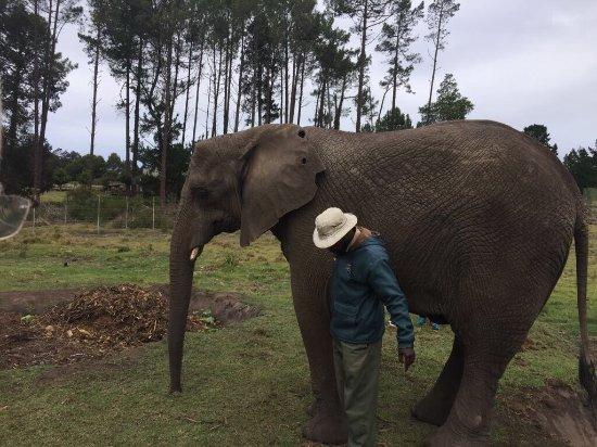 Knysna Elephant Park: photo1.jpg