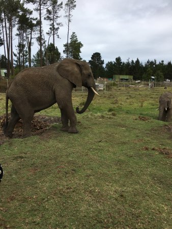 Knysna Elephant Park: photo3.jpg