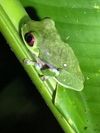 Golfito, Costa Rica: photo0.jpg