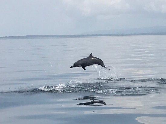 Golfito, Costa Rica: photo2.jpg