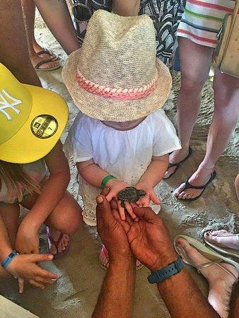 Bayahíbe, República Dominicana: Turtles Sanctuary