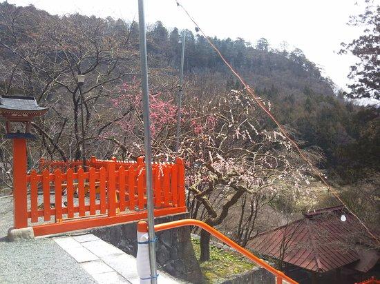 Kanazakura Shrine : DSC_0256_large.jpg