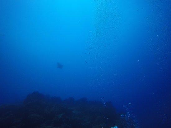Flic En Flac: Unterwasserwelt - Adlerrochen