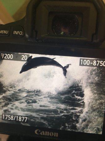 Sea Screamer: photo0.jpg