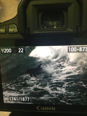 Sea Screamer: photo2.jpg